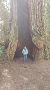 Kim Matthews Redwoods