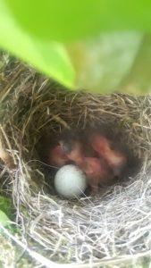 Ann Franklin birds nest