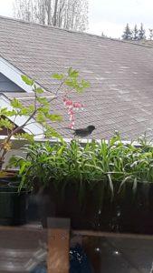 Bird on Ann Franklin's balcony